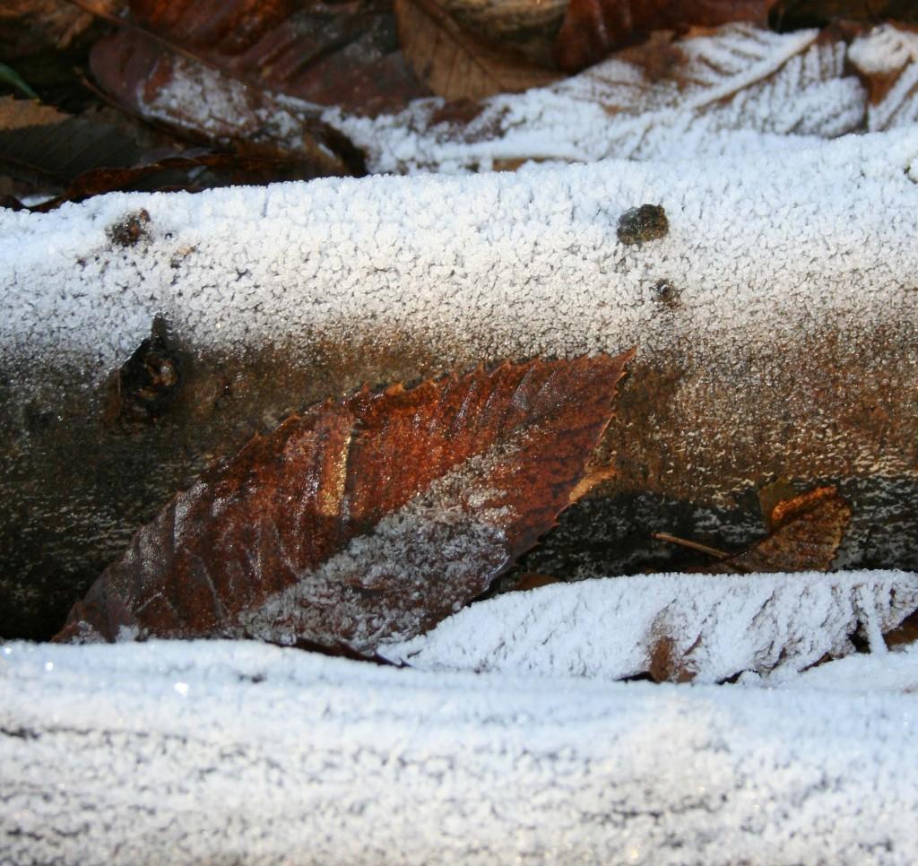 Frosty winter logs